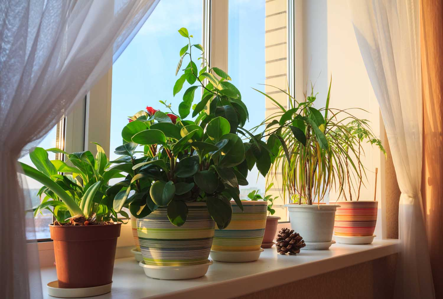 Indoor Plants For Home House Plants Beaverton Oregon Farmington Gardens