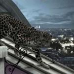 L'ODYSSEE de CARTIER film FashionDailyMag sel 19 brigitte segura
