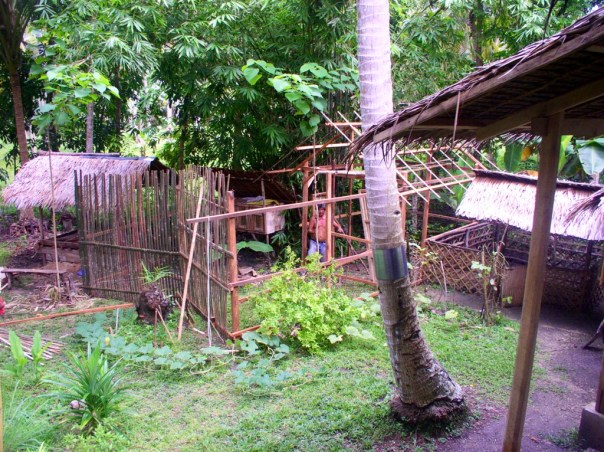 The chicken house/run project in progress – Bebe and Alex worked on this construction. We spent some 8,000 pesos on materials and extra on labour.