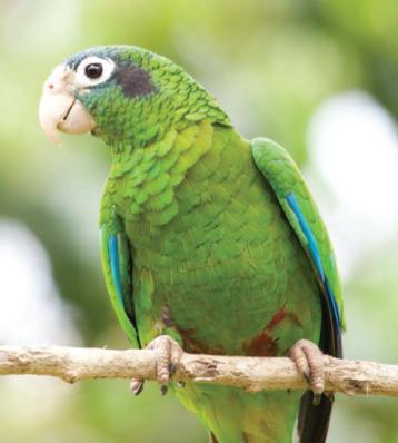 clamidiosis-aviar-2