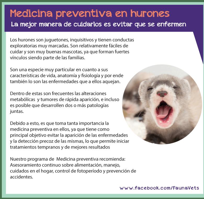 Medicina preventiva en hurones - Fauna Vets