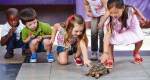 Salmonella en tortugas - enfermedades