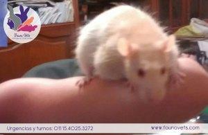 Rata con tumor en axila