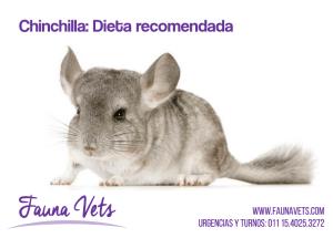 dieta recomendada chinchilla veterinarios exoticos fauna vets