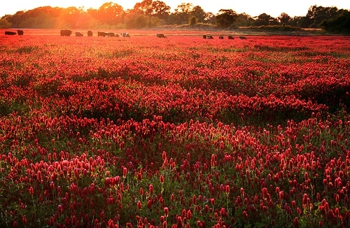 Vintage Flower Wallpaper Iphone Field Flowers Red Sunset Vyer Image 19035 On Favim Com