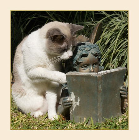 Funny Girl Wallpaper Quotes Cat Cats Cute Funny Reading Statue Image 20918 On