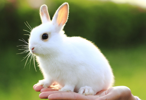 Cute White Baby Rabbits Wallpapers Animal Bunny Cute Hand Nature White Image 27373 On