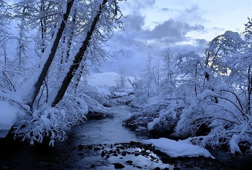 Falling Snow Wallpaper Iphone Beauty Nature Snow Solitude Tree Winter Image