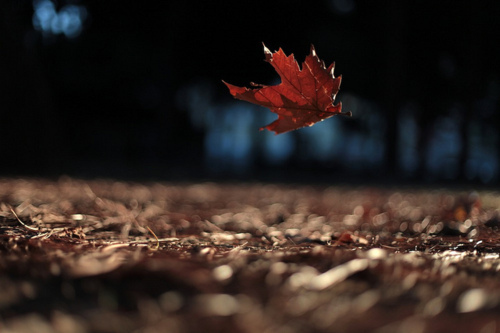 Falling Leaves Wallpaper For Iphone Air Autumn Falling Leaf Leaves Photography Image