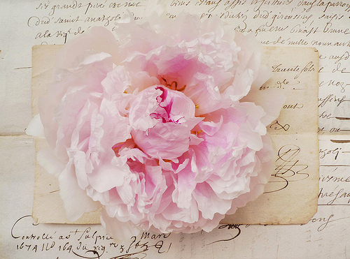 Peony Love Quote Wallpaper Beautiful Letter Peony Pink Vintage Image 103253 On