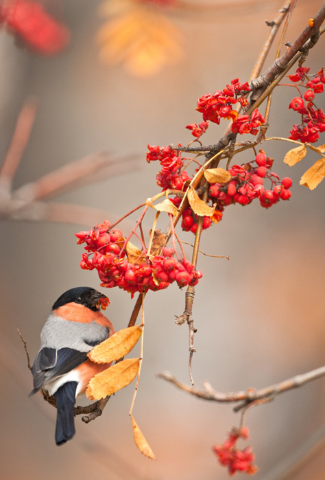 Love Couple Wallpaper For Iphone 5 Autumn Beautiful Bird Colors Fall Photography Image