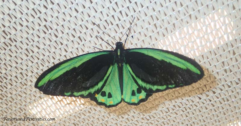 GreenButterfly