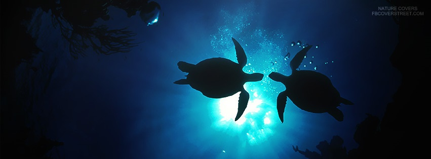 Black And White Wallpaper Hd Sea Turtles Facebook Covers Fbcoverstreet Com