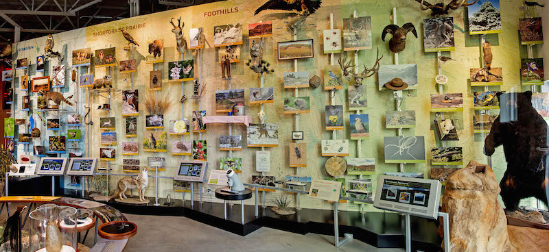 Field Trips at Fort Collins Museum of Discovery