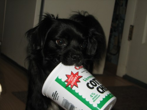 Medium Of Cottage Cheese For Dogs