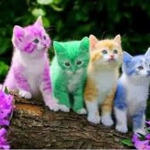 Cute Wallpapers Of Kittens And Puppies Kitten Or Cat Feed Bag Pet Supply