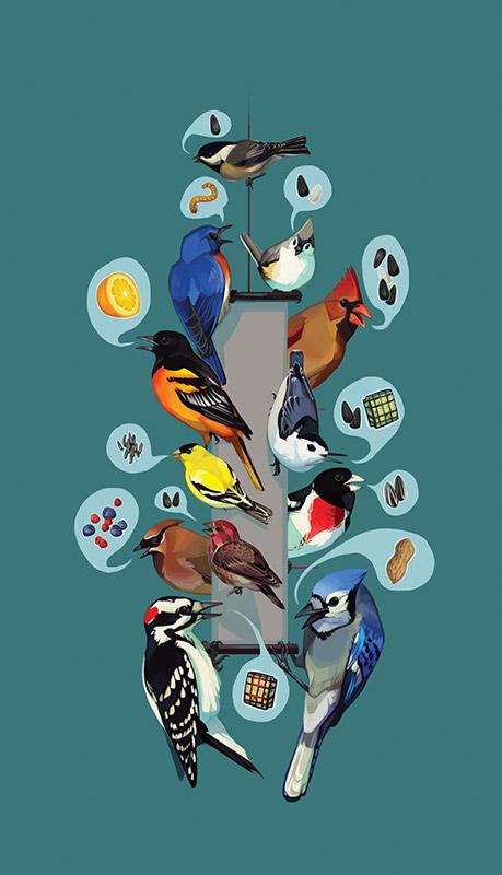 Fall Bird Feeder Wallpaper Common Feeder Birds Feederwatch