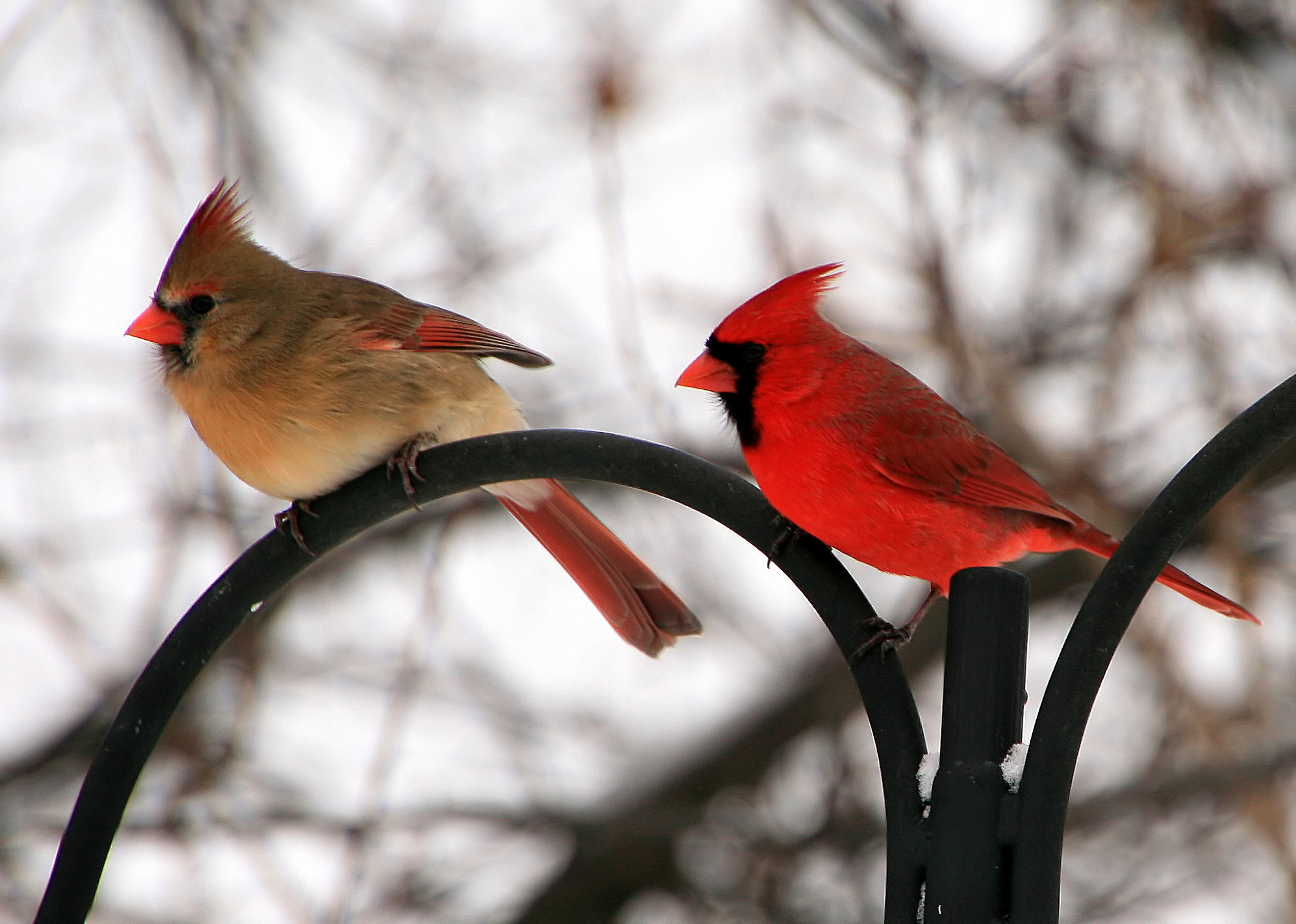 Fall Bird Feeder Wallpaper Research News Gender Gap At Our Feeders Feederwatch