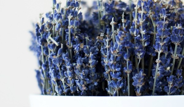 Beauty Herbs: Lavender