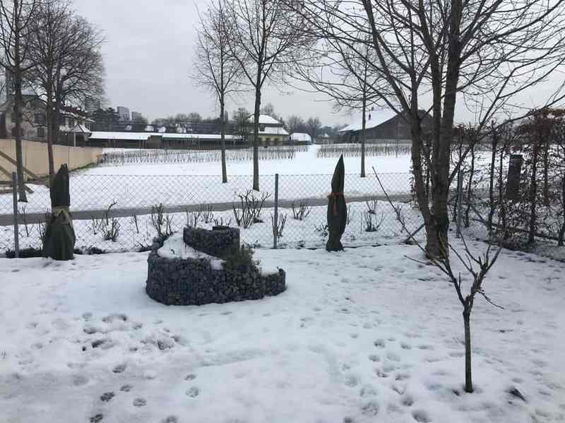 Winterstimmung Feigengarten Januar 2016 (1)
