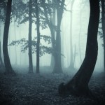 bosque_femeniname