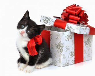 Cat_Christmas_gift_wallpapers12014