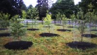 Fruit Tree Orchard and Berry Patch Installation - Natural ...