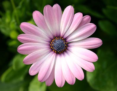 Fall Daisy Wallpaper Fernlea Flowers Ltd Flower Blooms