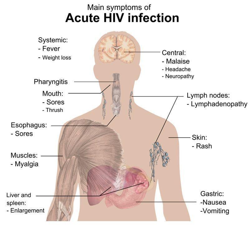 HIV infection/Fertilitypedia