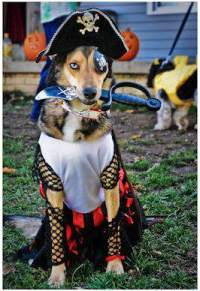 How to Win a Dog Halloween Costume Contest - Fidose of Reality