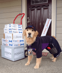 Clever Ideas for Dog Halloween Costumes