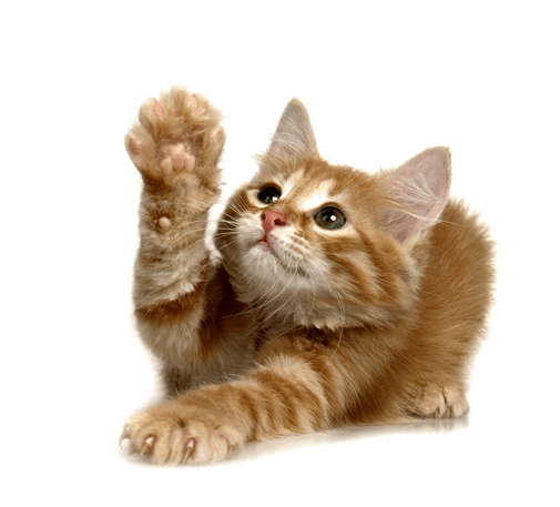 Cute Wallpapers Of Grumpy Cat Cat Transparent Background Www Imgkid Com The Image