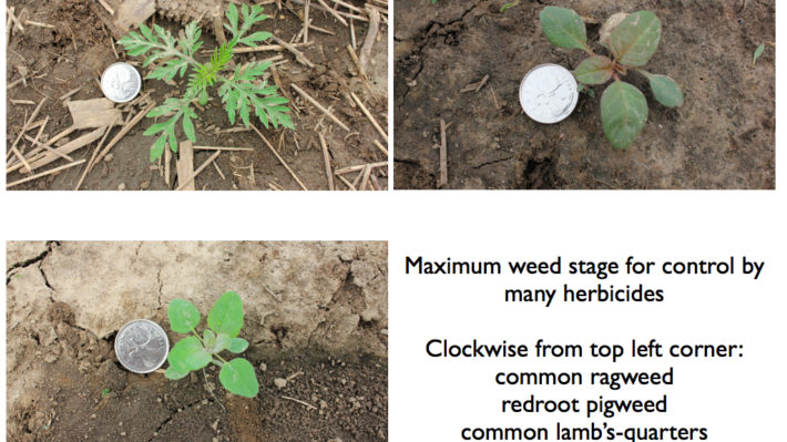 Can I Apply Post-Emergent Herbicides to Soybeans Before the 1st