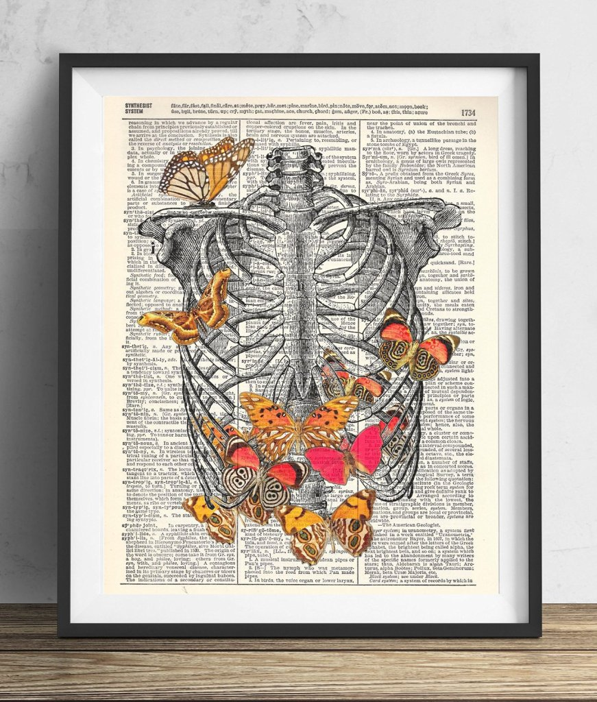 Rib Cage With Butterflies, check it out on amazon amzn.to/29KViko