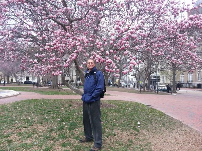 Original Michael Cherry Blossom