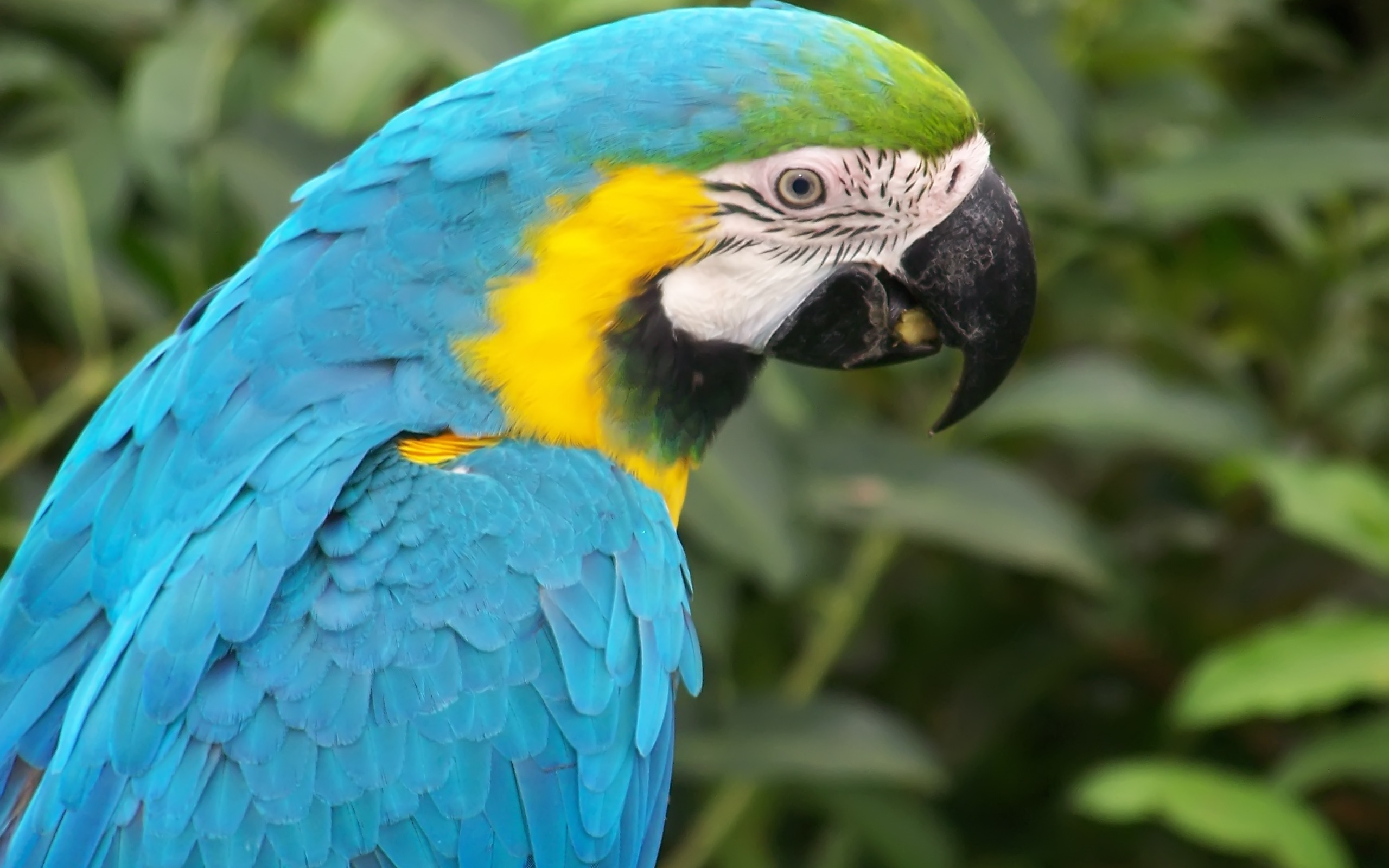 Parot Wallpapers Blue Macaw Parrot Wallpaper Parrots Animals Wallpapers In Jpg