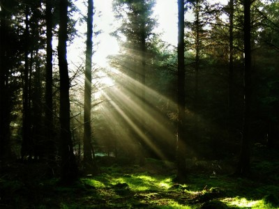 Sun Through The Trees Wallpaper Landscape Nature Wallpapers in jpg format for free download