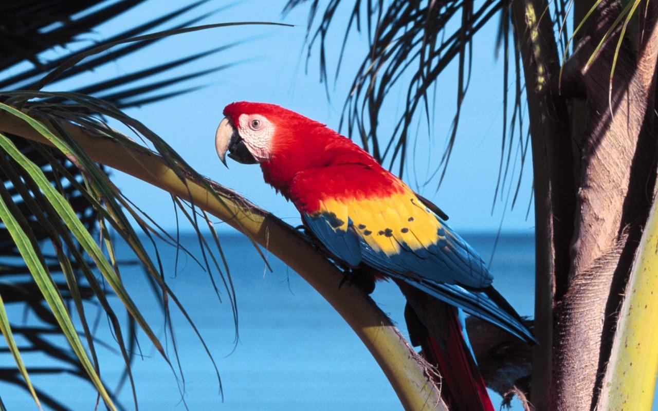 The Simpsons 3d Wallpaper Scarlet Macaw Wallpaper Parrots Animals Wallpapers In Jpg