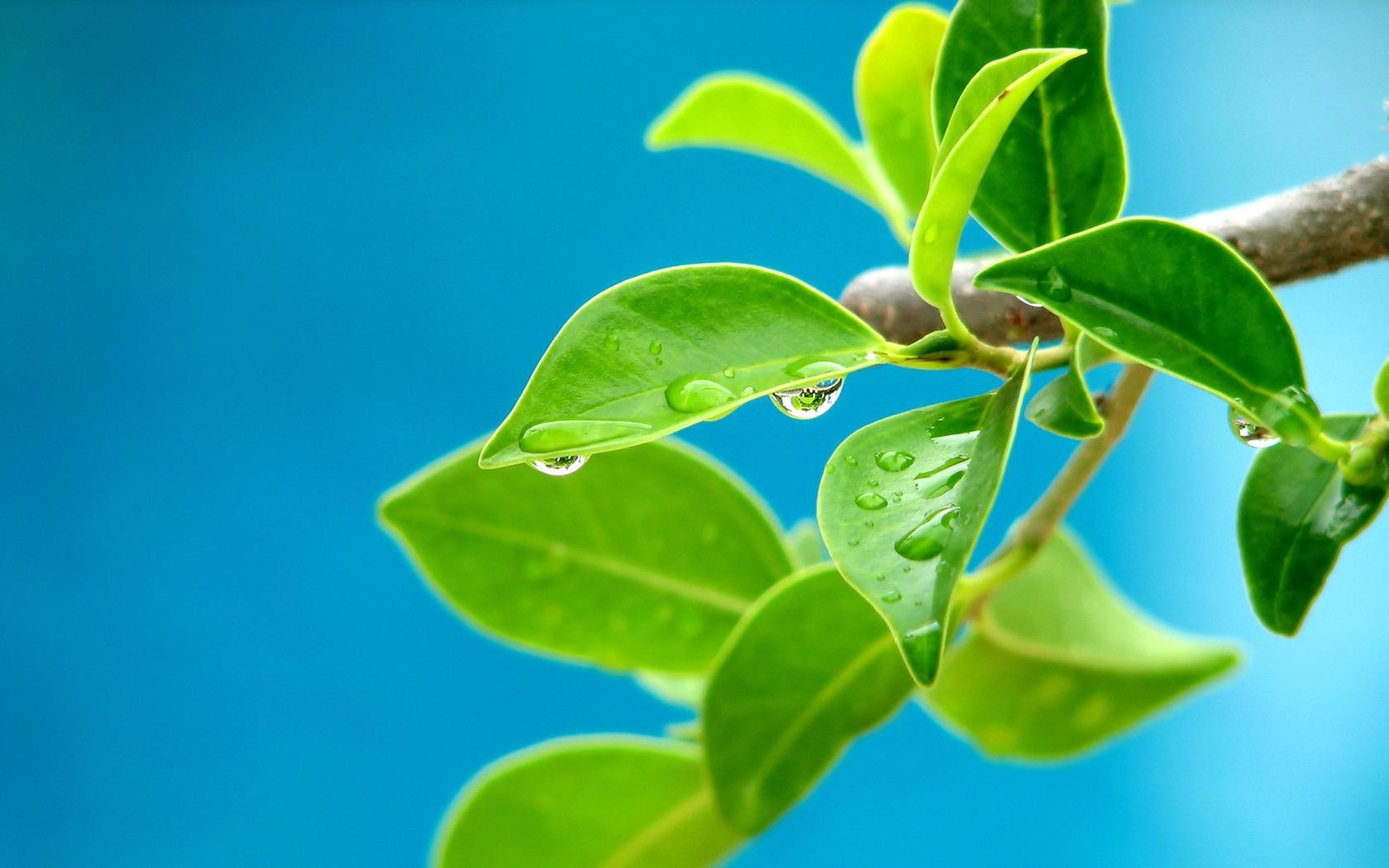 3d Leaves And Water Drop Wallpaper Beautiful Leaves Wallpaper Other Nature Wallpapers In Jpg