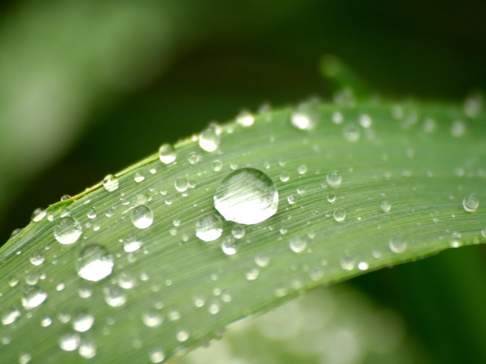 3d Wallpaper Water Drop Leaf Drops Wallpaper Plants Nature Wallpapers In Jpg