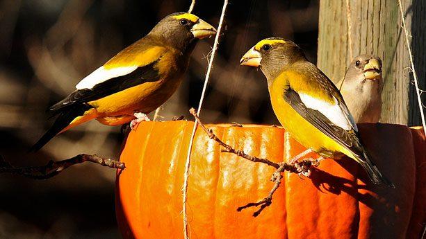 Fall Bird Feeder Wallpaper Should I Stop Feeding Birds In Fall So They Can Start