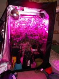 TBT - My first Grow - Grow Journals - Growery Message Board