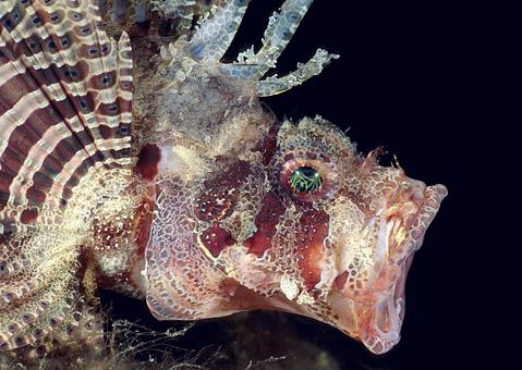 كائنات بحريه غريبه 2016 ، صور كائنات نادره 2016 ، اسماك ملونه 120927134326GiEa.jpg