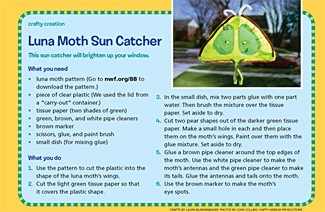 Luna Moth Sun Catcher 325x212
