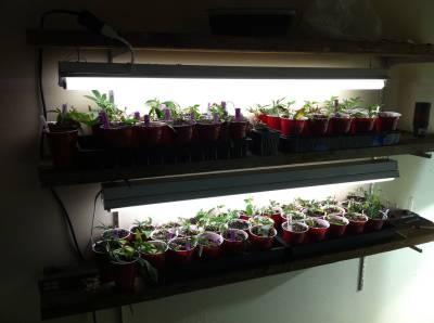 Continuing California Medical Grow Ethnobotanical Garden