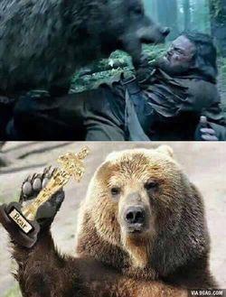 bear_oscar