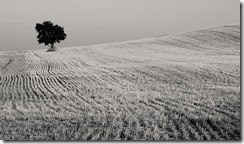 lone tree by Jule_Berlin