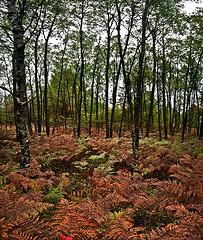 Fern Overgrowth