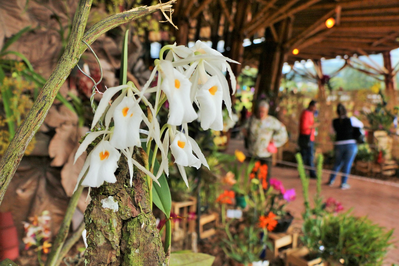 Exposición de Orquídeas en el Recinto del Pensamiento.