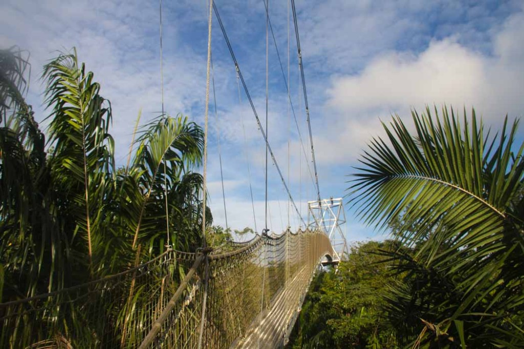 longest canopy walk in africa
